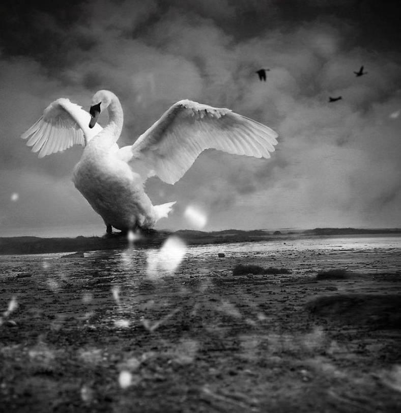 birdwatching-3-900x927