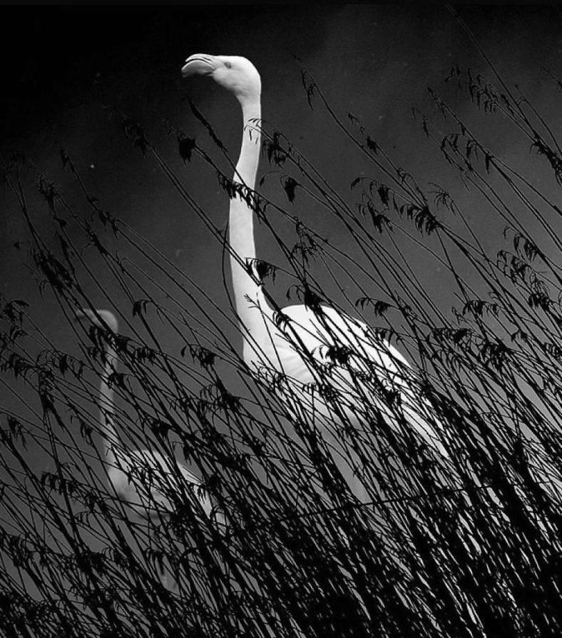 birdwatching-7-900x1022