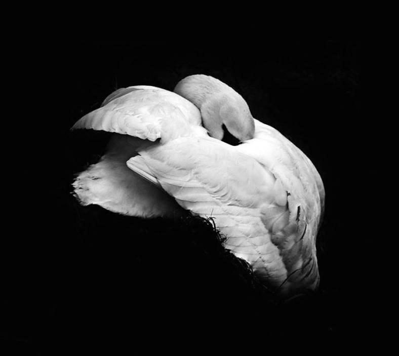 birdwatching-9-900x803