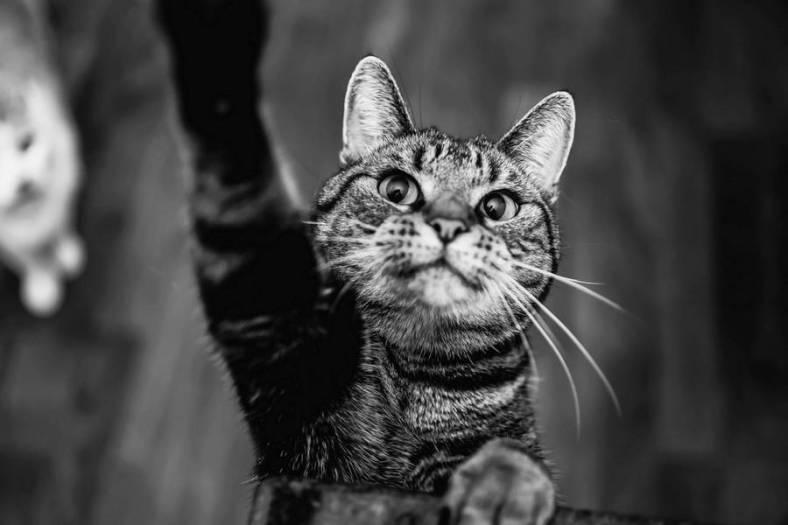 inspiringcatsportraits15-900x600