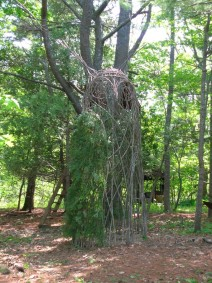 seer-2012-saplings-by-dodson-moerlein-680x909