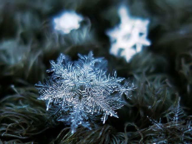 snow13-650x0_q70_crop-smart