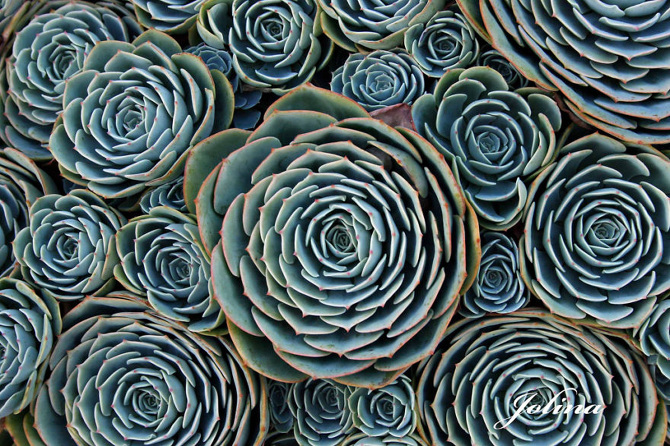 succulents_670