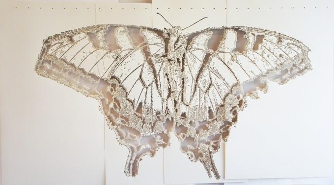 swallowtail1-680x378