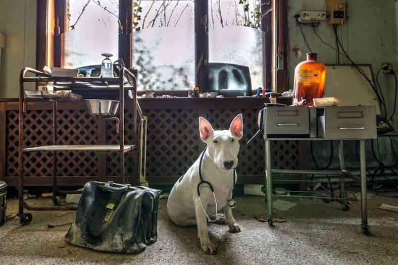 adorablebullterrier-4-900x600
