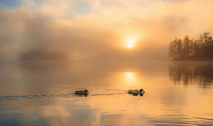 another-magical-sunrise-at-lake-bled-in-slovenia-9__880-680x403