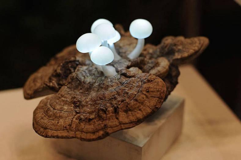 mushroomled-1-900x598