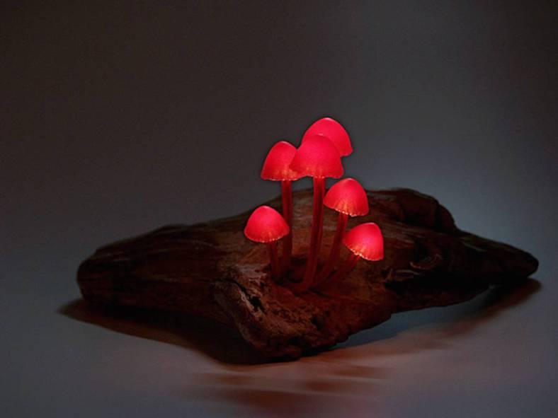 mushroomled-7-900x675