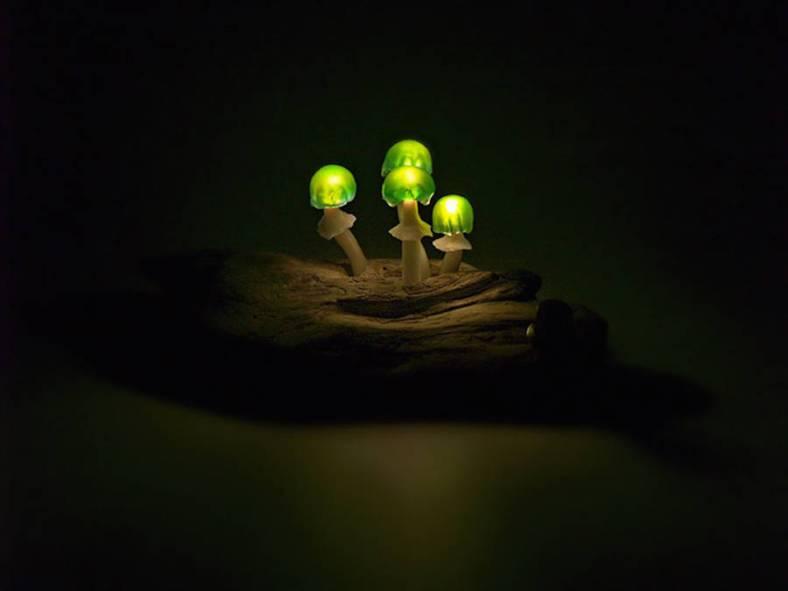 mushroomled-9-900x675