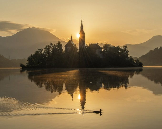 mystic-sunrise-at-lake-bled-with-duck-680x539