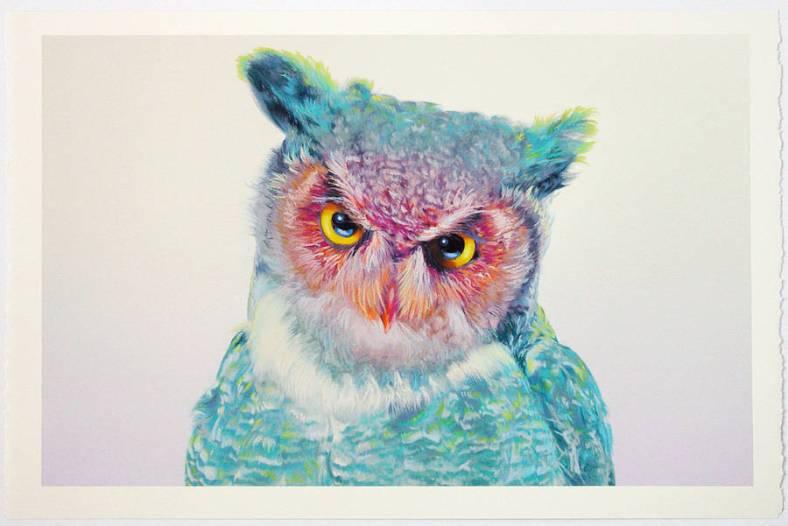 owl-0-900x601