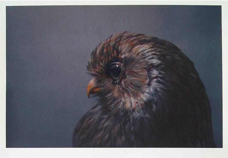 owl-1-900x623