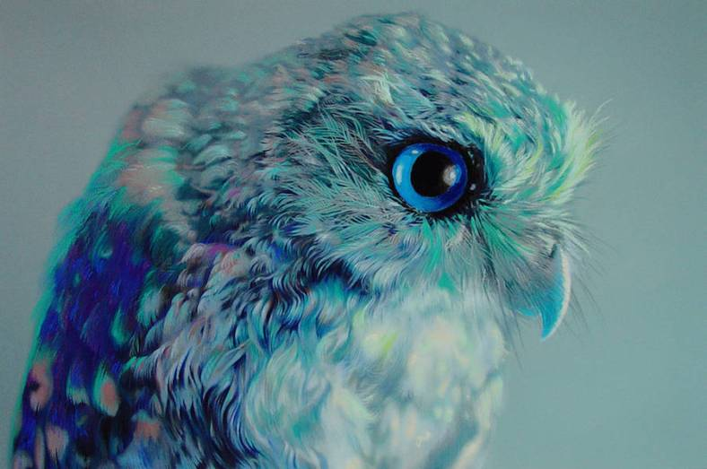 owl-10-900x598