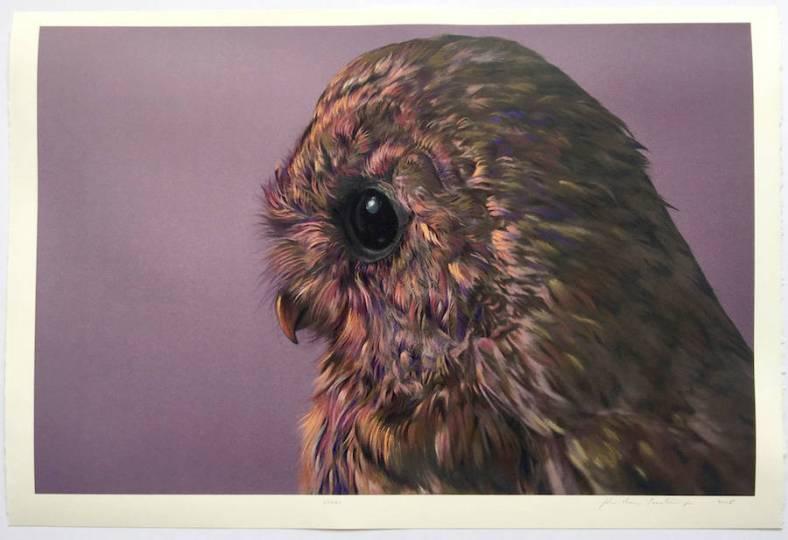 owl-11-900x617