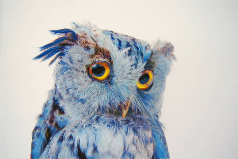 owl-12-900x601