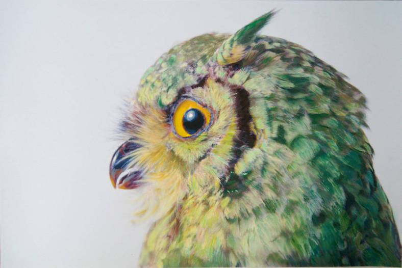 owl-13-900x601