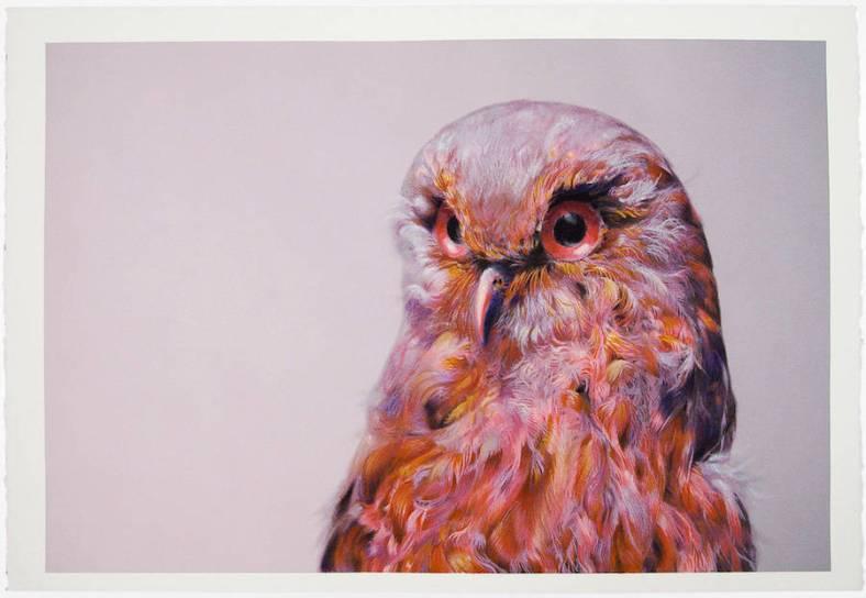owl-6-900x622