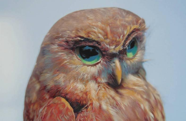 owl-7-900x588