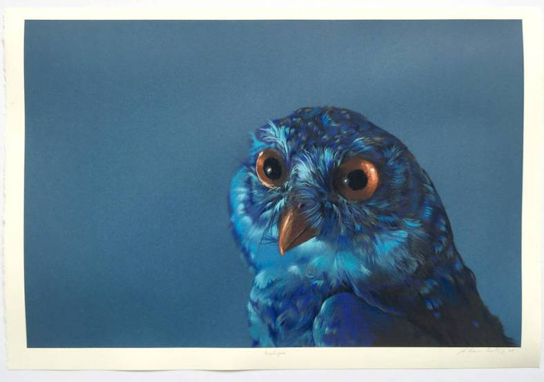 owl-8-900x633