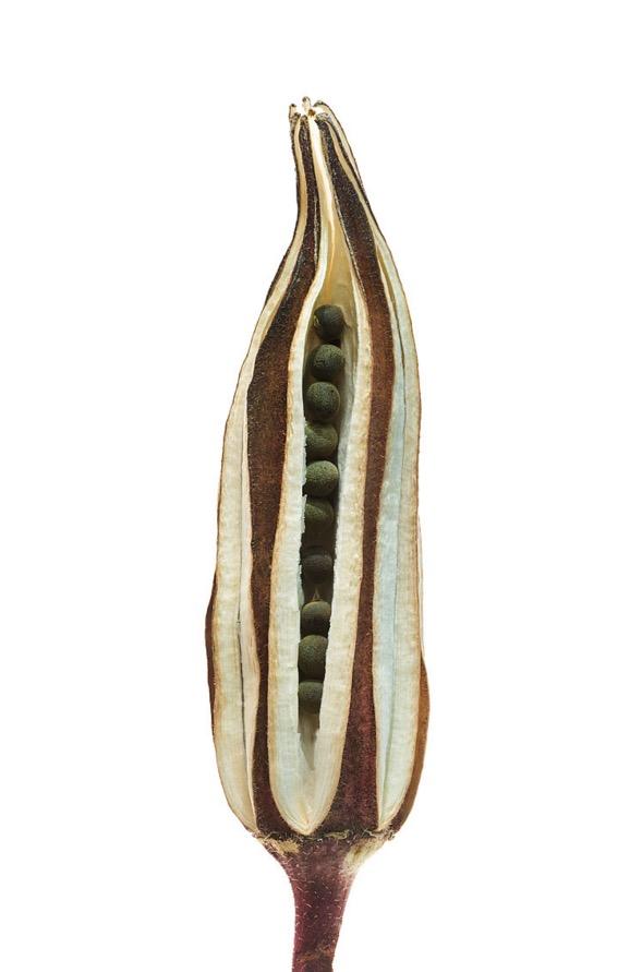 seeds-15