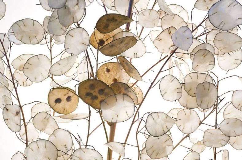 seeds-23-900x596