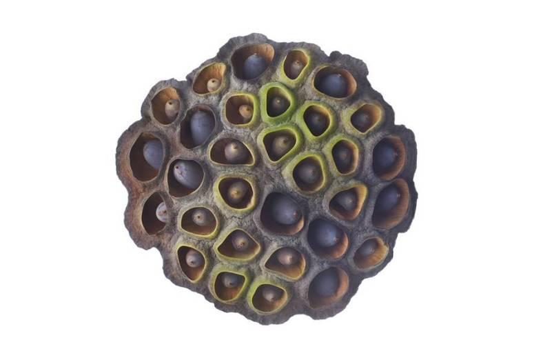 seeds-6-900x597