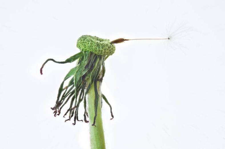 seeds-8-900x598