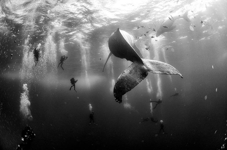 c2a9-anuar-patjane-floriuk-whale-whisperers