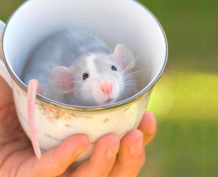 cuteness-explosion-animals-in-cups19__700