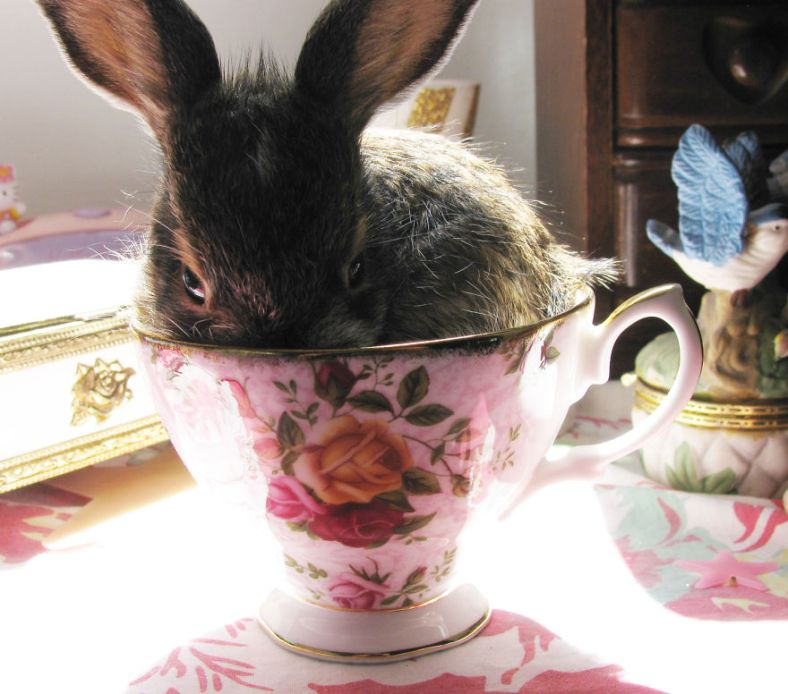 cuteness-explosion-animals-in-cups1__880