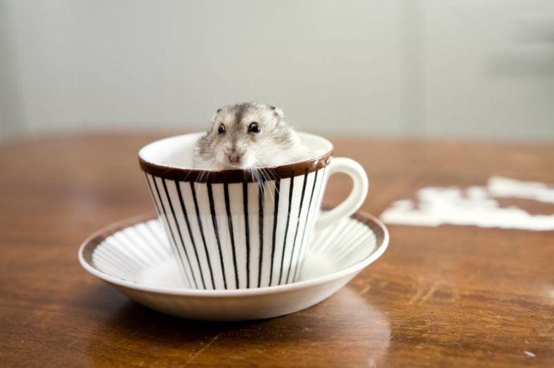 cuteness-explosion-animals-in-cups27__880