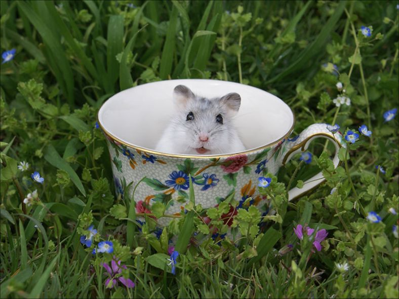 cuteness-explosion-animals-in-cups3__880