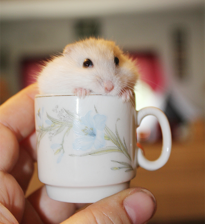 cuteness-explosion-animals-in-cups9__700