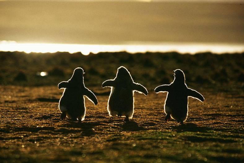 penguin-1-900x600