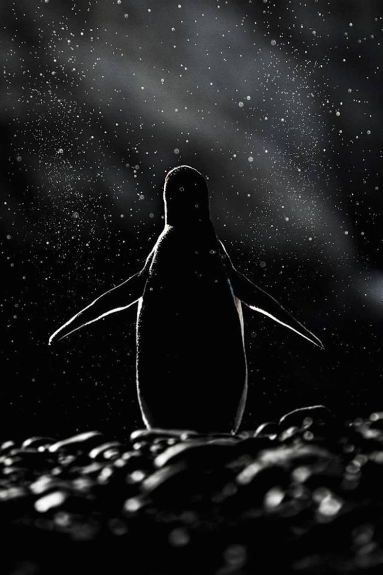 penguin-10-900x1350