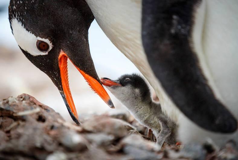penguin-11-900x606