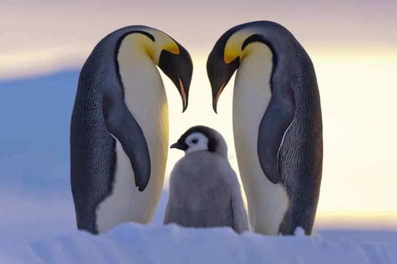 penguin-12-900x600