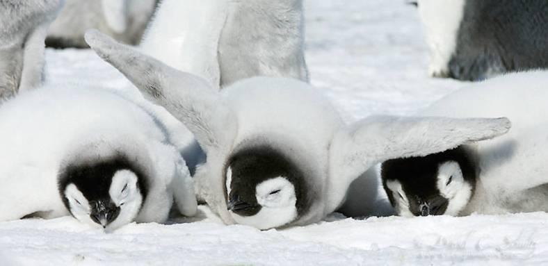 penguin-15-900x438