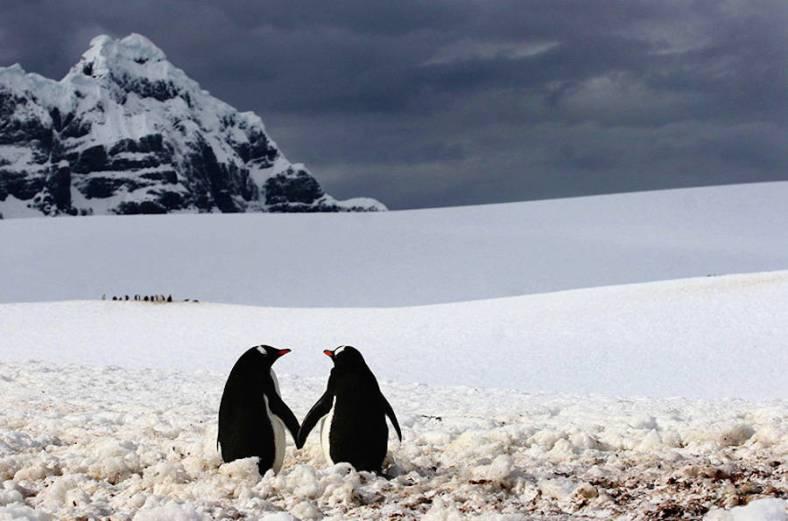penguin-18-900x596