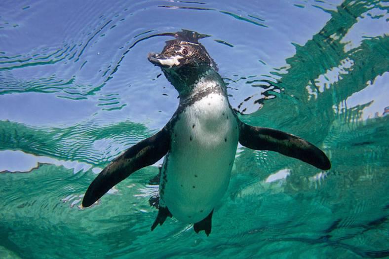 penguin-19-900x600