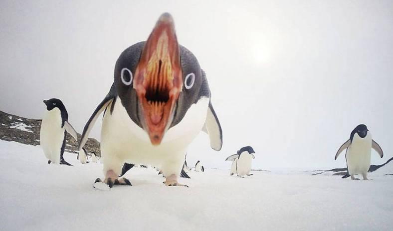 penguin-20-900x532