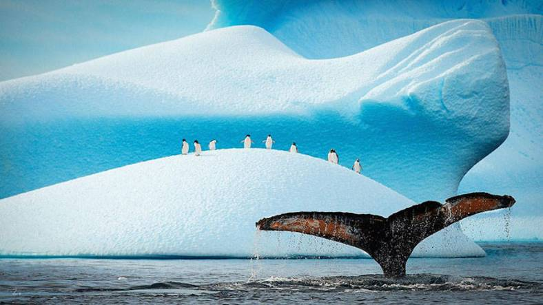 penguin-4-900x506