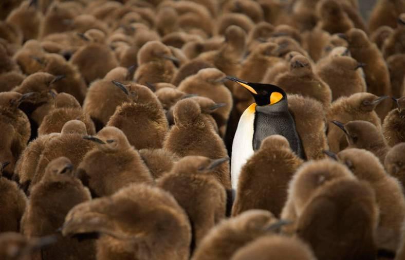 penguin-6-900x579