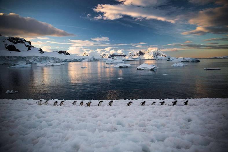 penguin-7-900x600