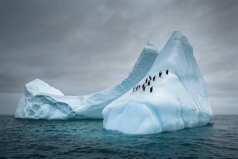 penguin-8-900x602