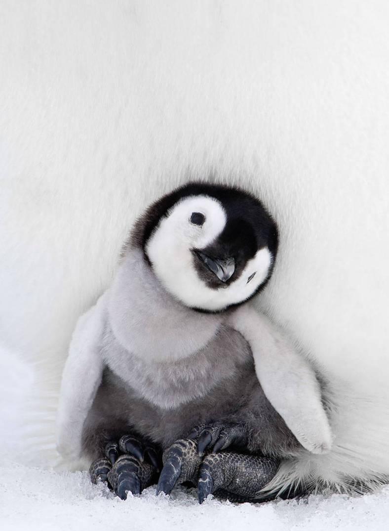 penguin-9-900x1227
