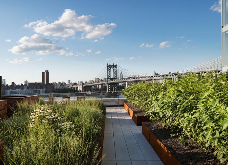 rooftop-meadow_180216_03