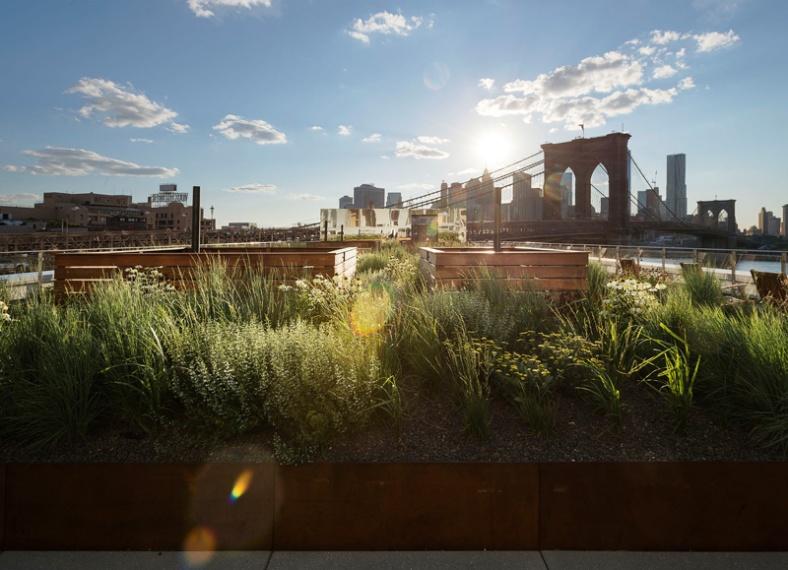 rooftop-meadow_180216_04