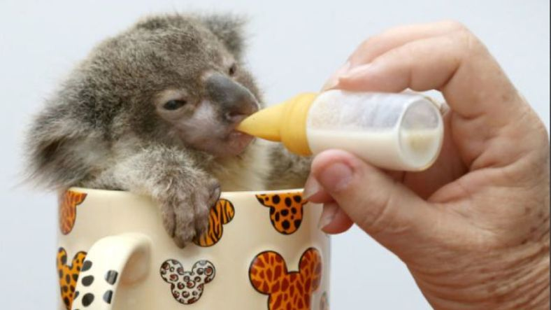 the-world_s-top-10-best-images-of-animals-in-cups-311__880-w584h3281__880