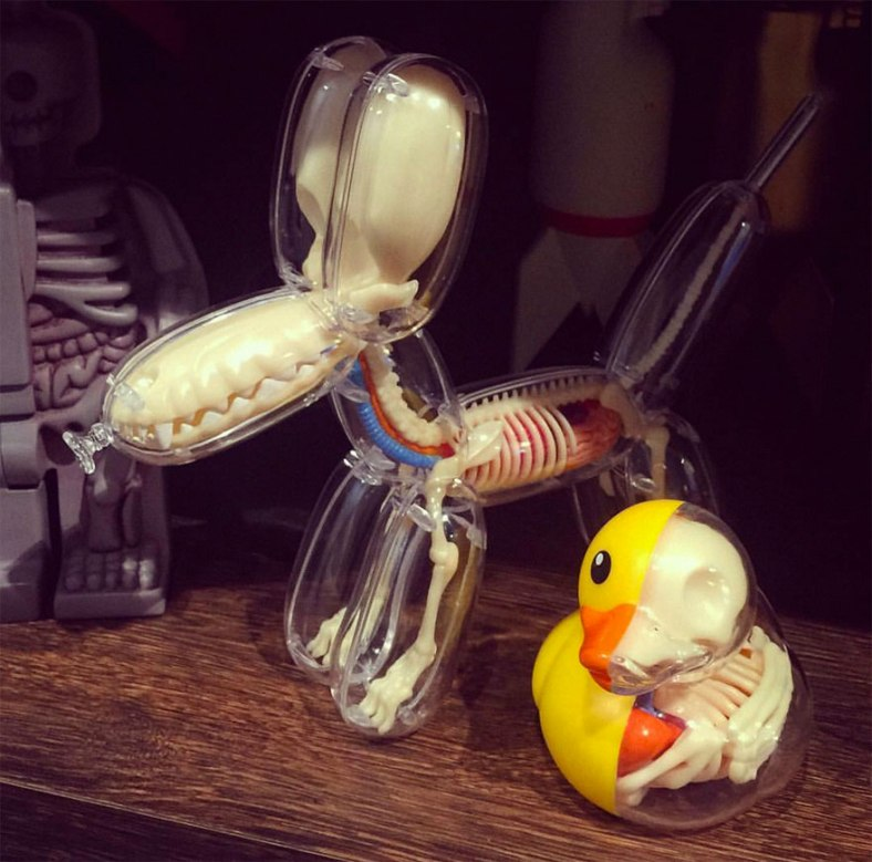 balloon-animals-filled-with-anatomical-details6